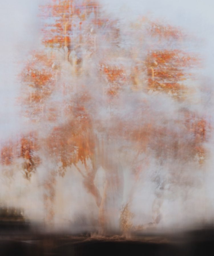Painting of peach color tree part of Auric Lines collection